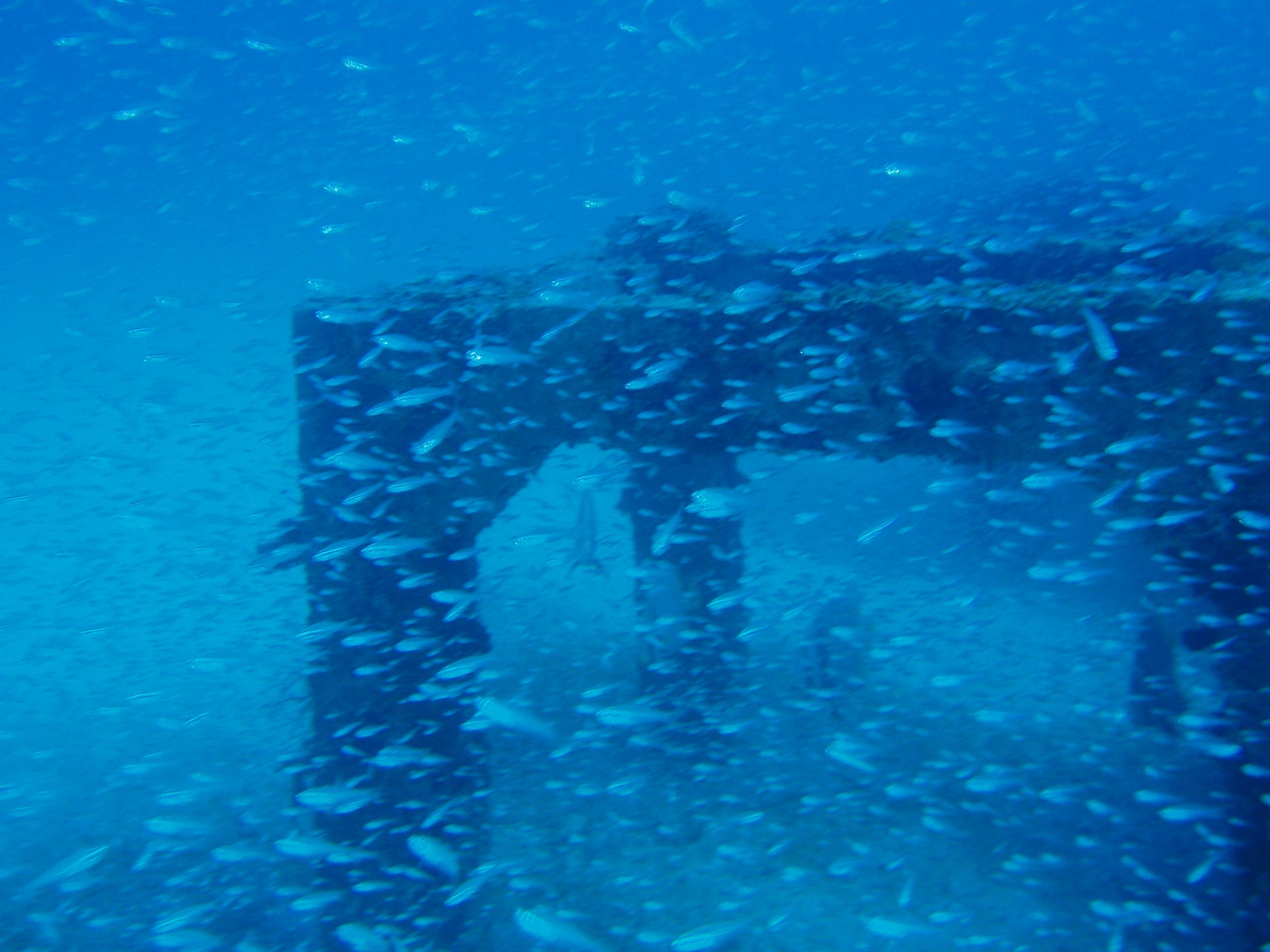 8月2日 ポイント1 アダン下 ポイント2 平瀬 ポイント3 佐久原漁礁 水温28℃ 透明度20m