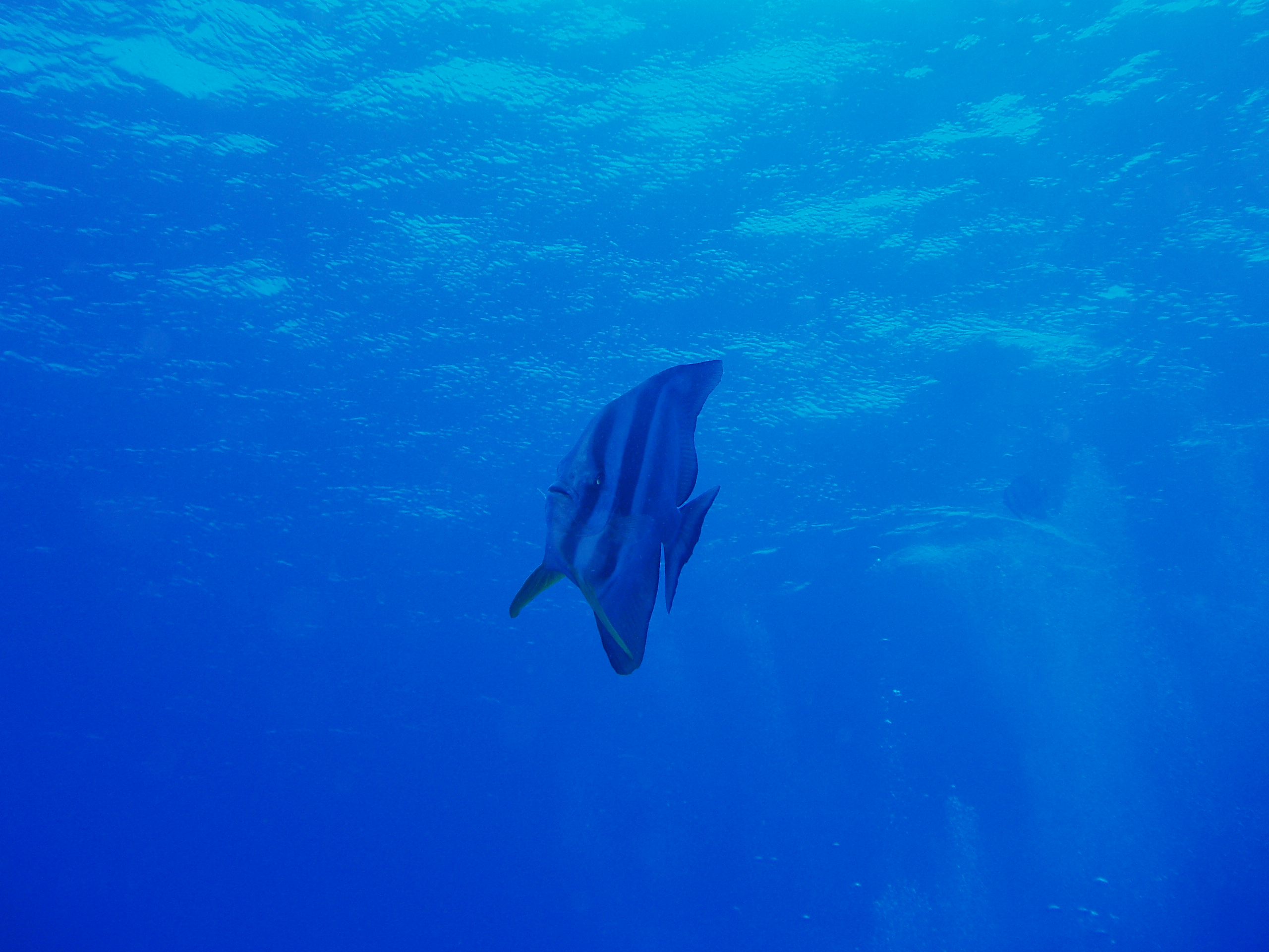 8月5日 ポイント1 安室漁礁 ポイント2 牛瀬 ポイント3 金瀬 水温28℃ 透明度30m