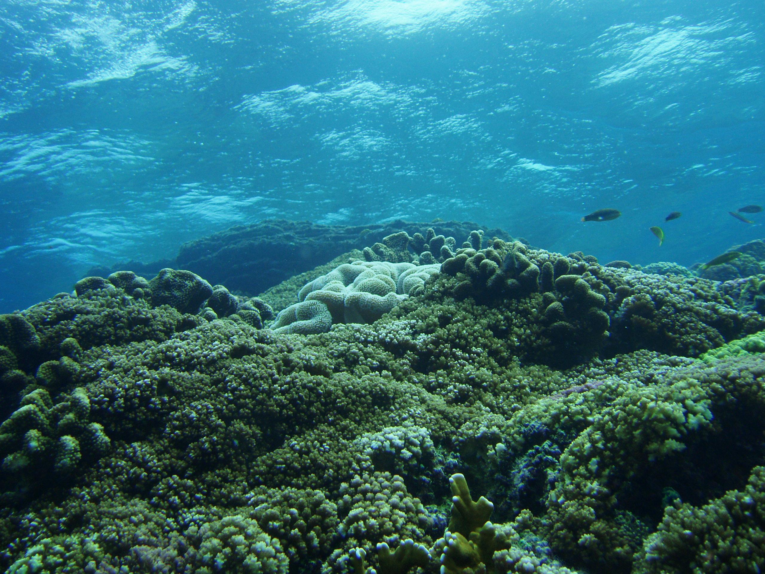 8月23日 ポイント1 奥武島 ポイント2 平瀬 水温28℃ 透明度25m