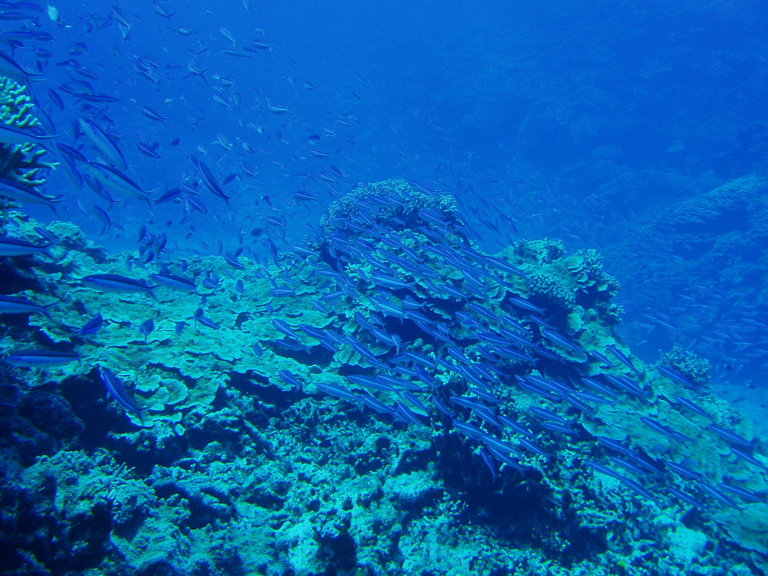 9月5日 ポイント1 ブツブツサンゴ ポイント2 イジャカジャ ポイント3 北浜 水温28℃ 透明度30m