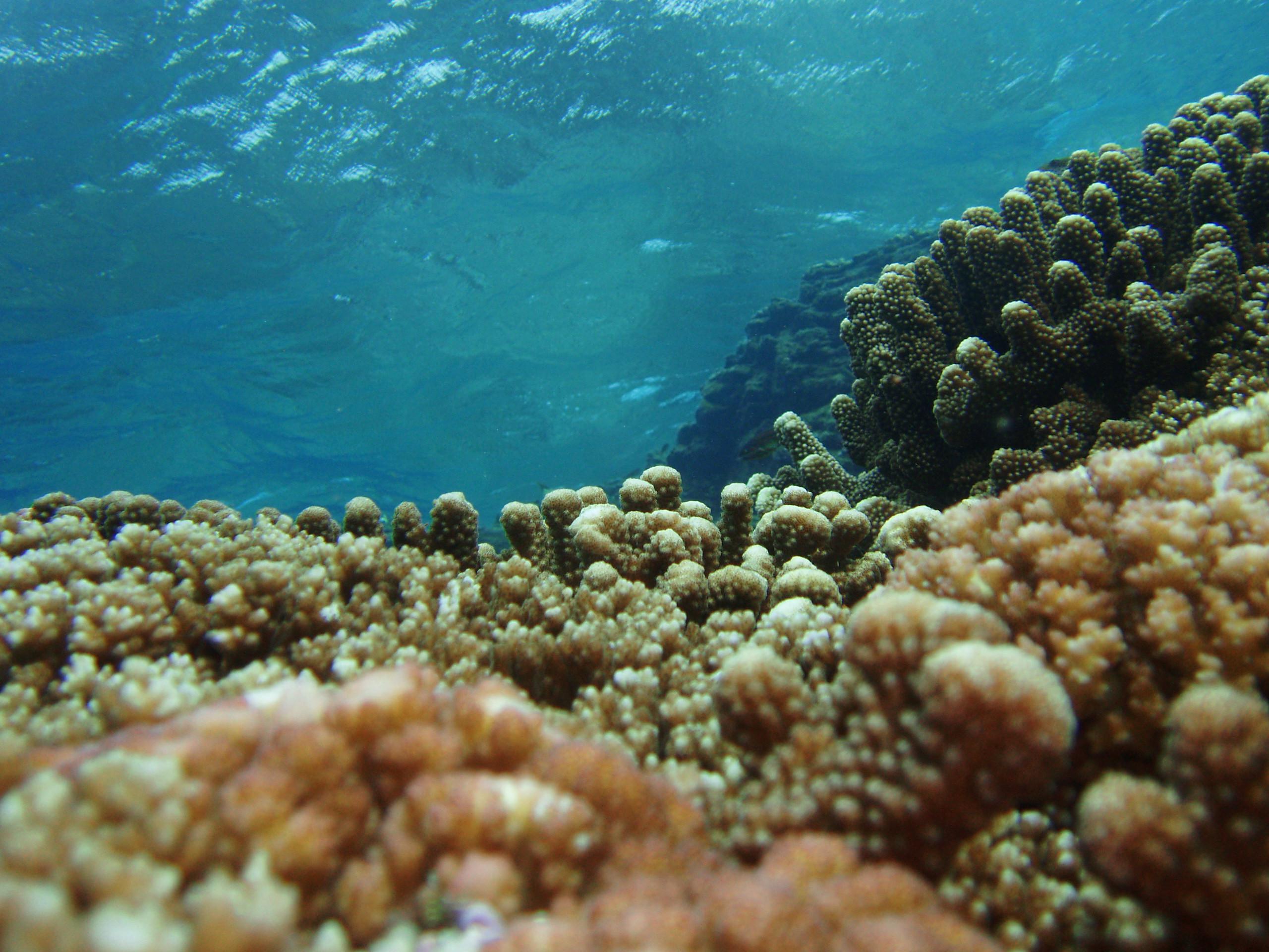 10月15日 ポイント1 名瀬隠れ根 ポイント2 佐久原漁礁 ポイント3 北浜 水温27℃ 透明度25m〜30m