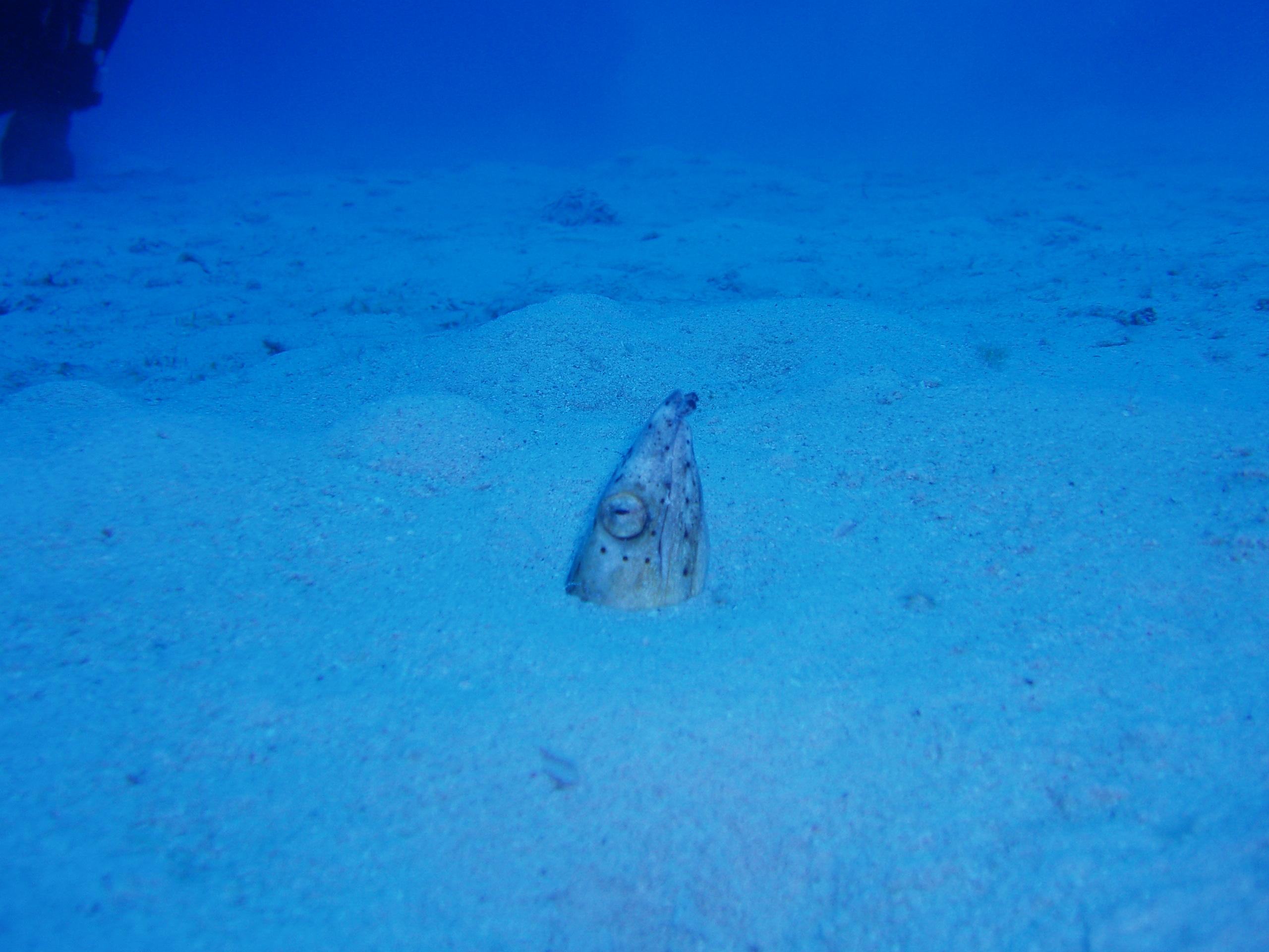 10月18日 ポイント1 久場キャニオン ポイント2 安室漁礁 ポイント3 アマビーチ前 水温28℃ 透明度25〜40m