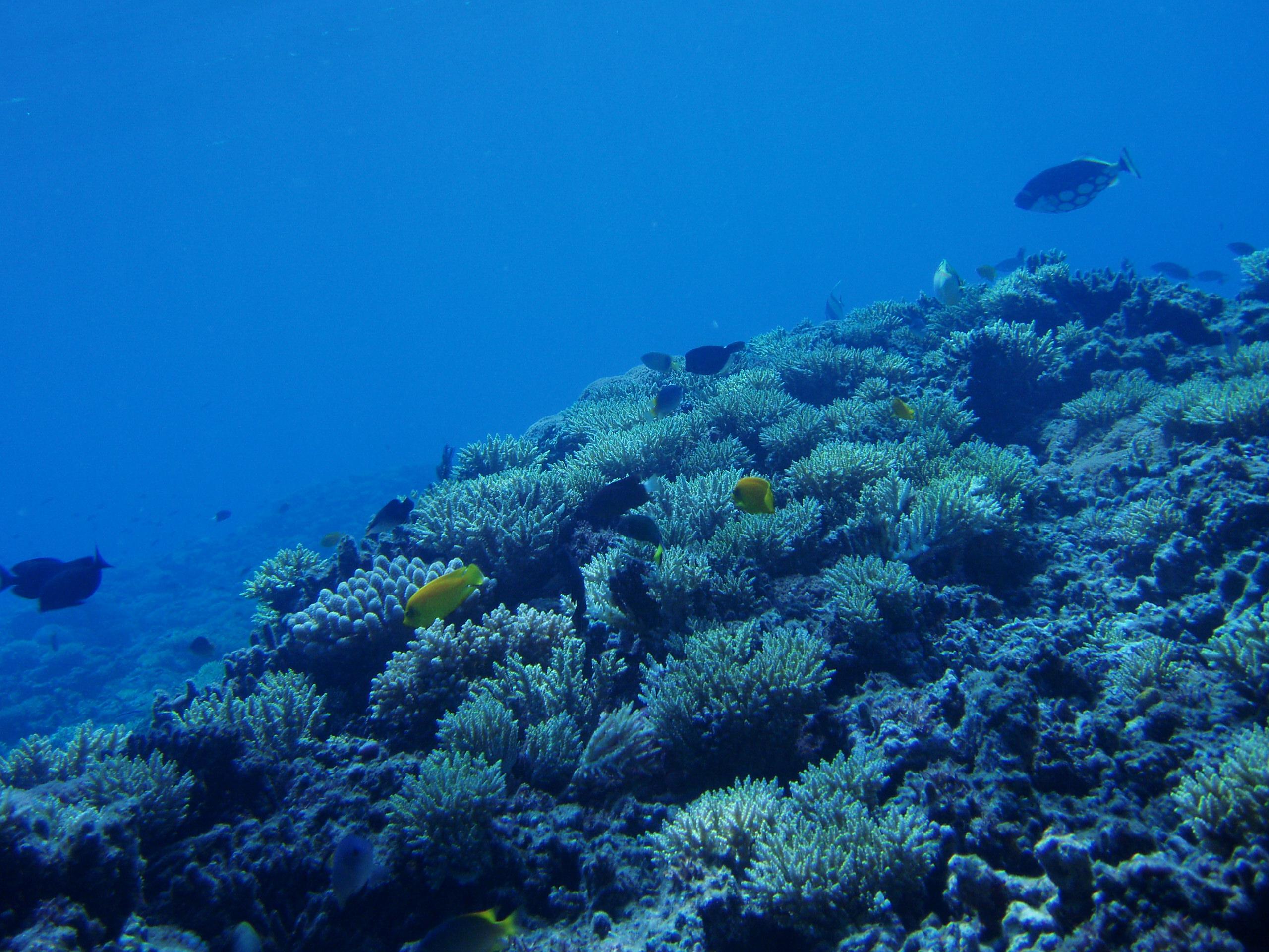 10月20日 ポイント1 ブツブツサンゴ ポイント2 アマビーチ前 ポイント3 コアシス 水温27℃ 透明度25m
