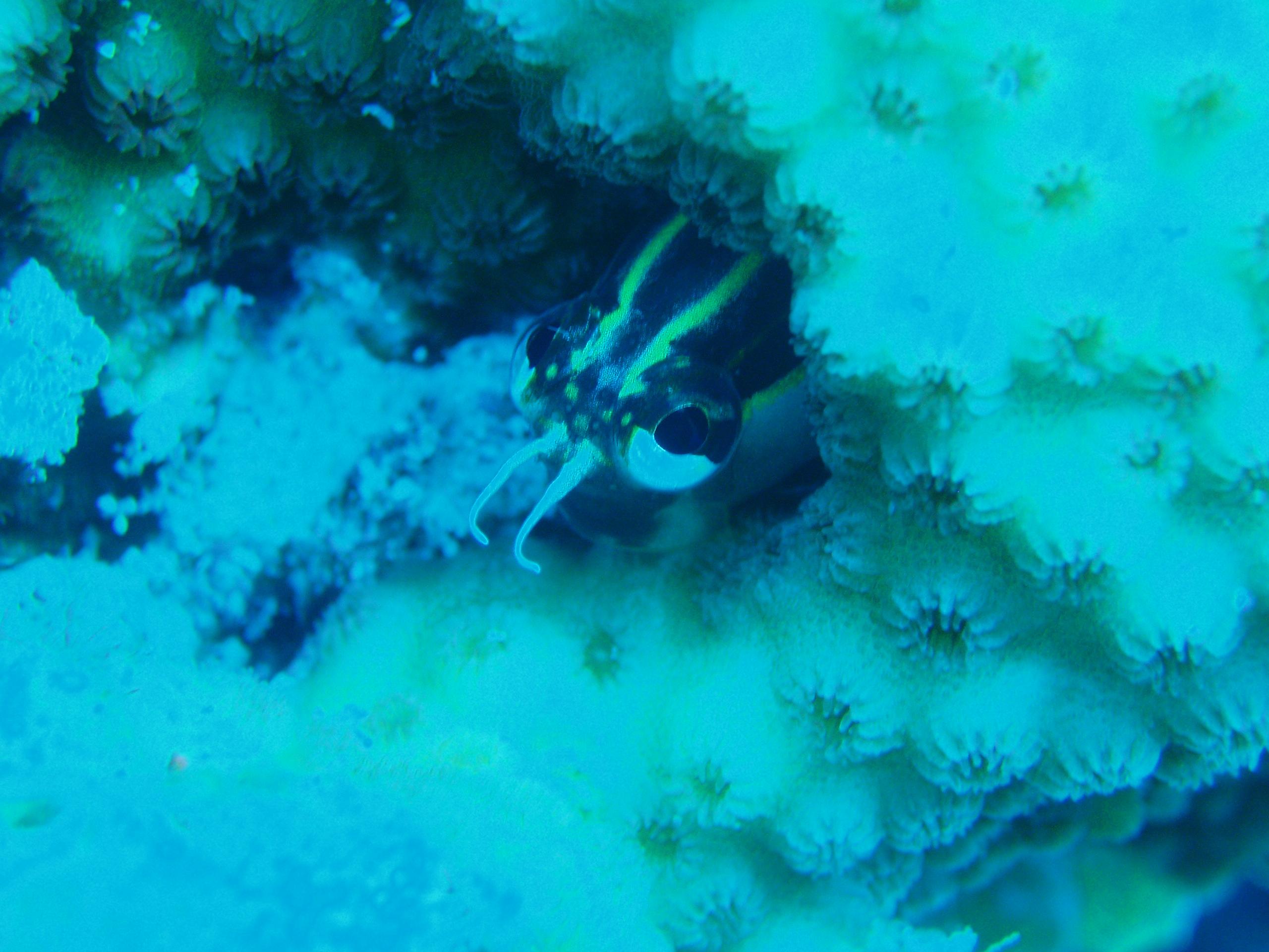 11月11日 ポイント1 ブツブツサンゴ ポイント2 アマビーチ前 水温26度 透明度28m