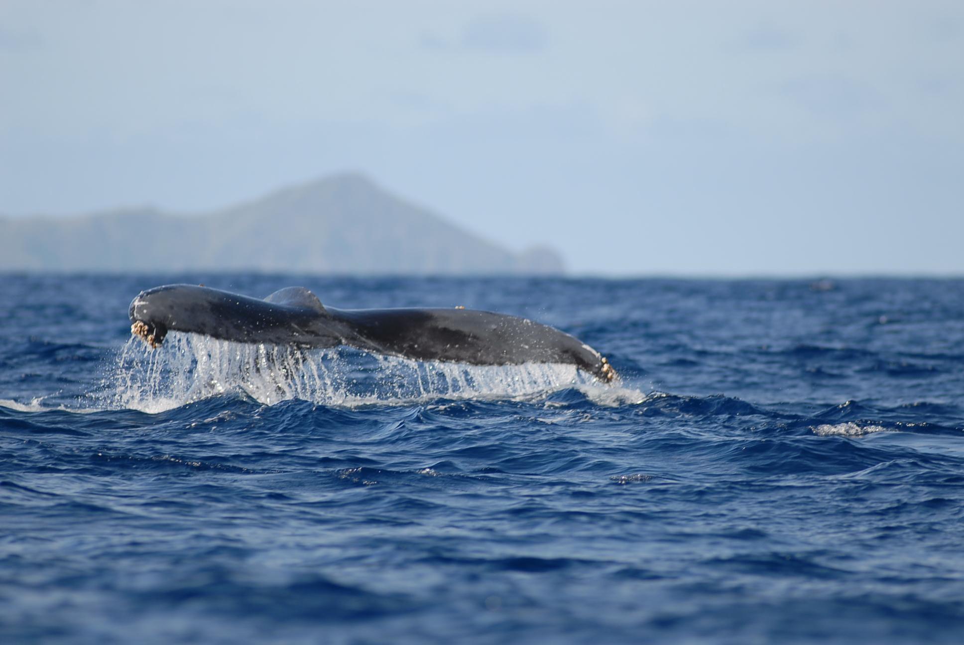 12月28日 今日のクジラ