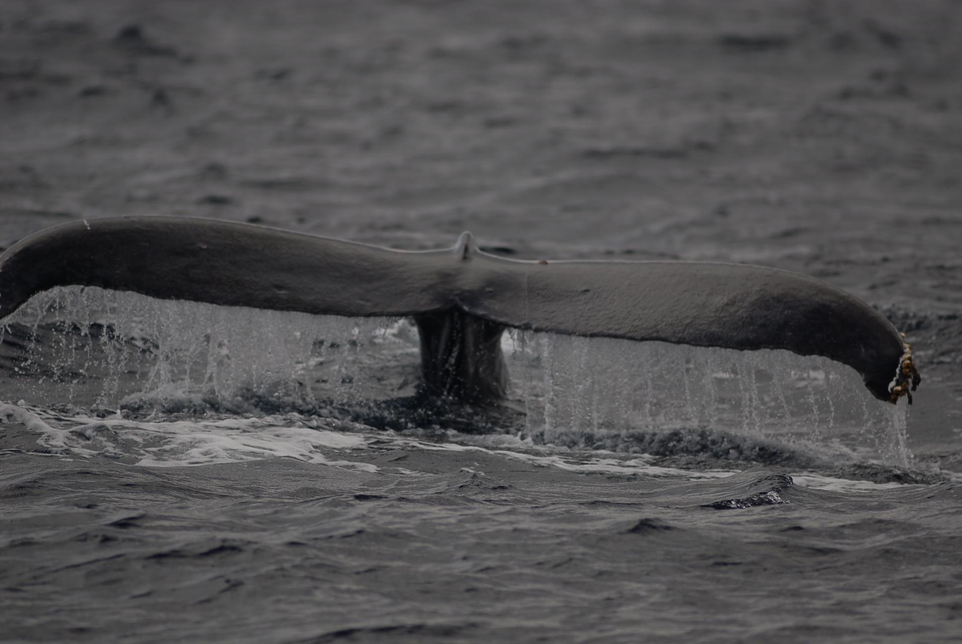 2月20日 鯨盛り??