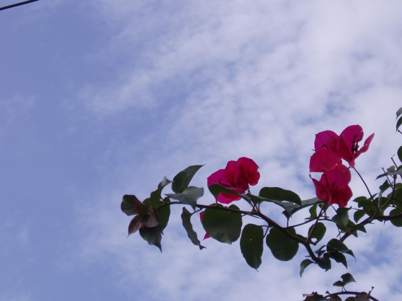 5月19日 庭の花たち