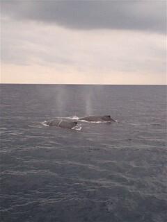 姫鯨のメンテナンス