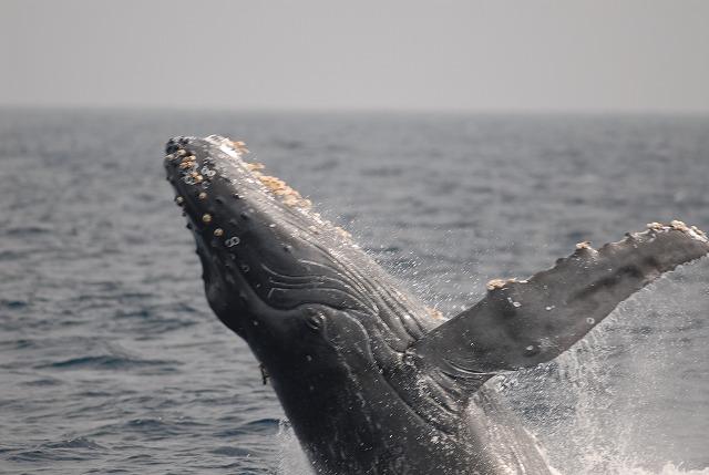 2月8日のクジラパート2