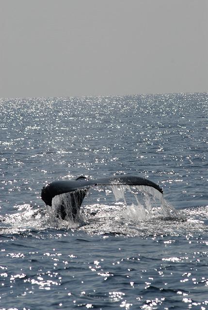 2月10日のクジラ