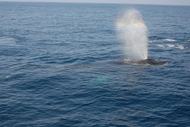 2月11日のクジラ