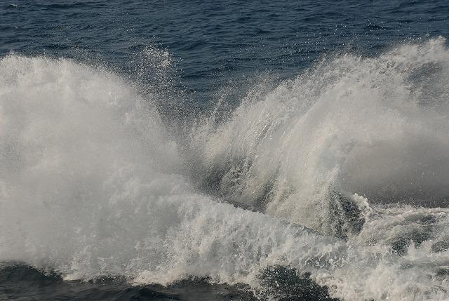 2月12日のクジラ