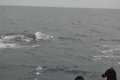 Fw: 2月22日(日)の鯨達