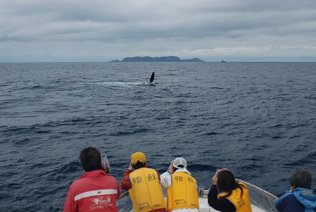 Fw: 3月4日クジラ達