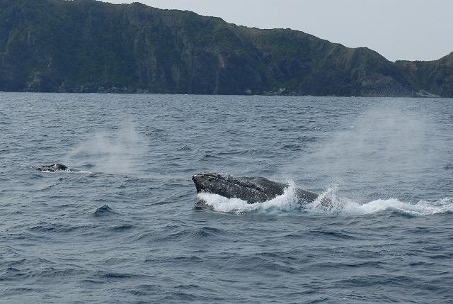 3月11日の鯨