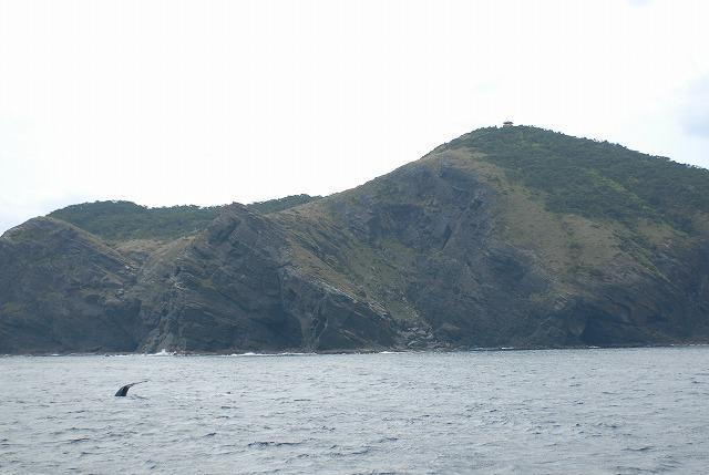 3月12日の鯨