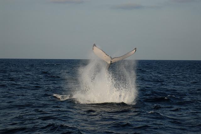 今日のクジラの写真