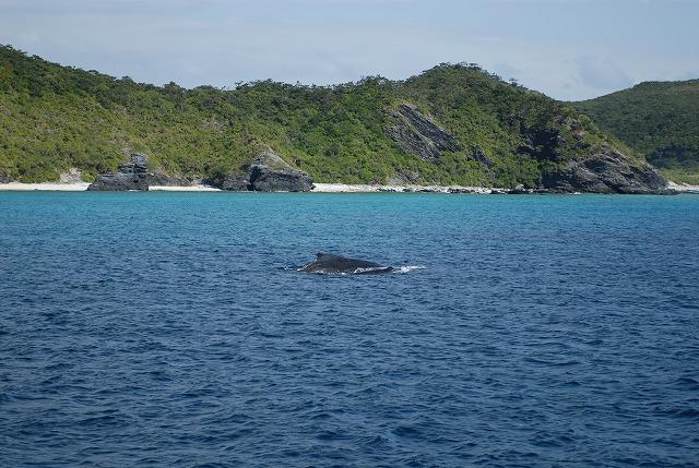 出たークジラ