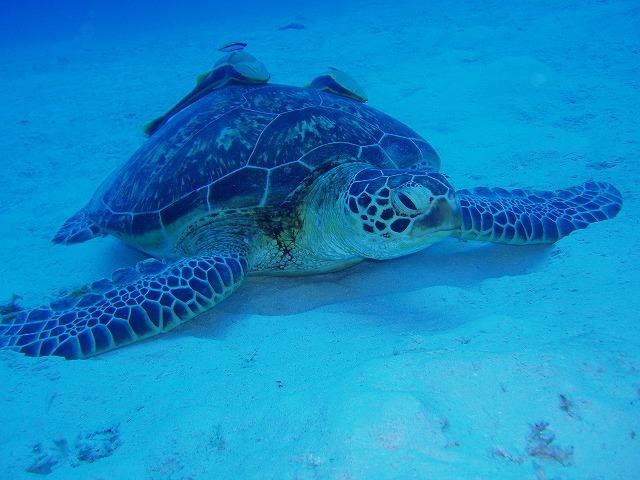 サンゴ産卵 2