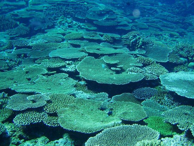 サンゴの図鑑