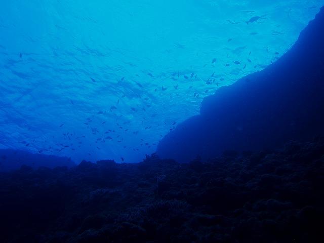 リクエストダイビング黒島