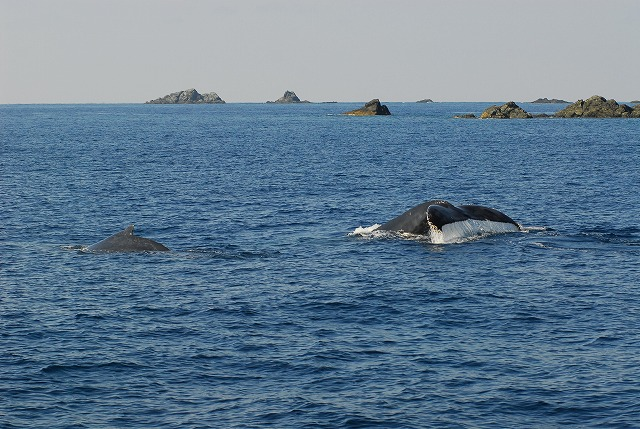 Fw: お待たせ!!初クジラ