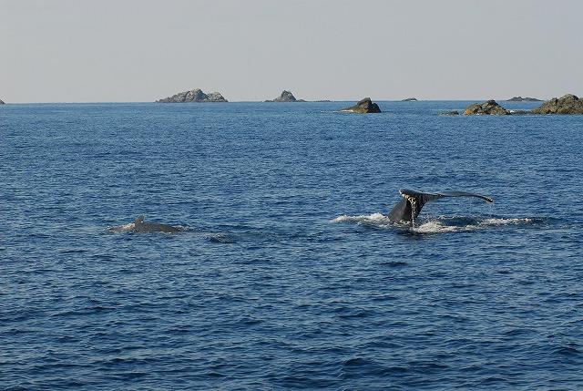 Fw: 初クジラ写真2
