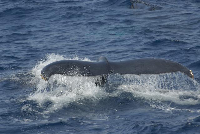 2010年 鯨春