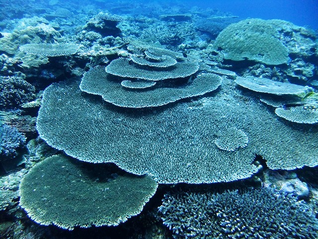 サンゴの五重塔