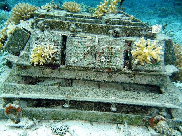 サンゴの移植