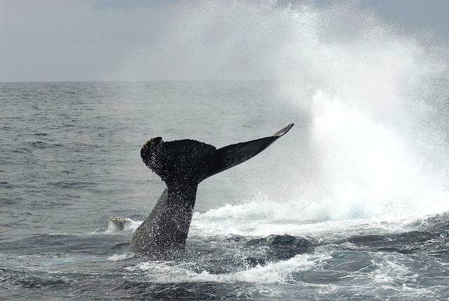 子クジラ初ブリーチ