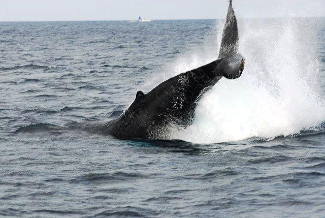 元気なクジラ