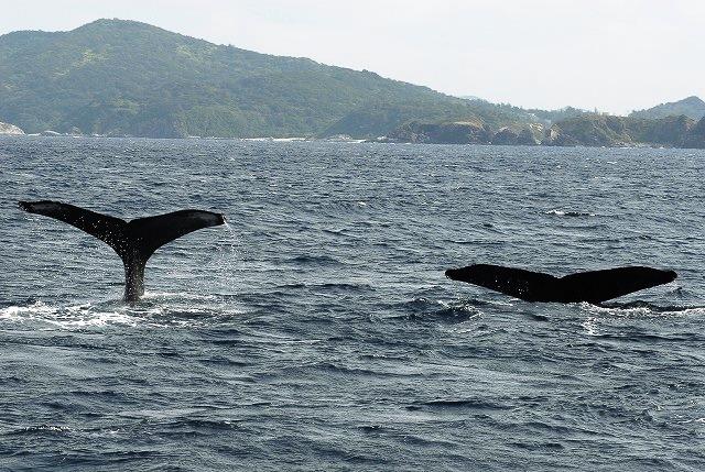 親子クジラ3ポット