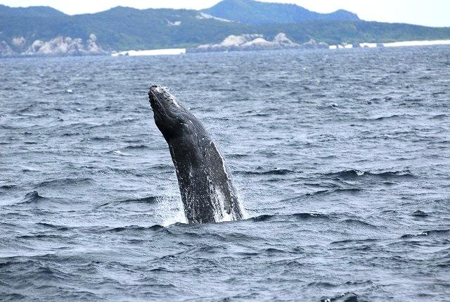 子クジラ大爆発!