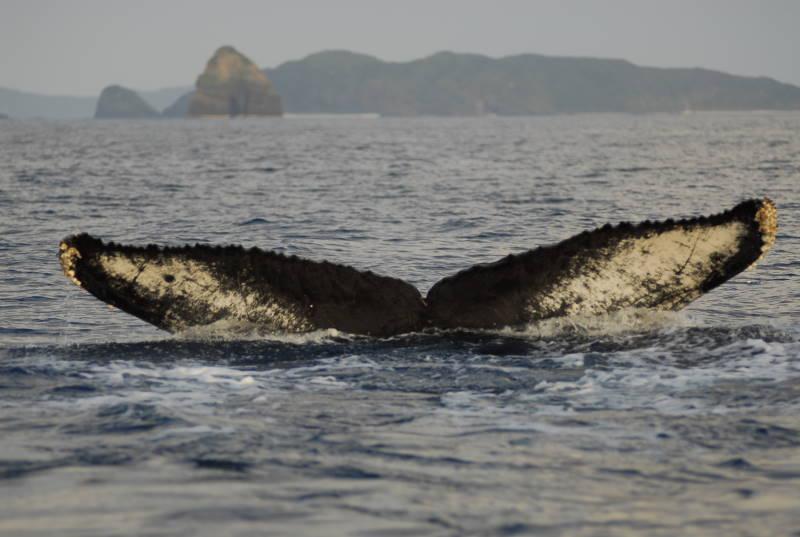 今日も鯨達は元気です。