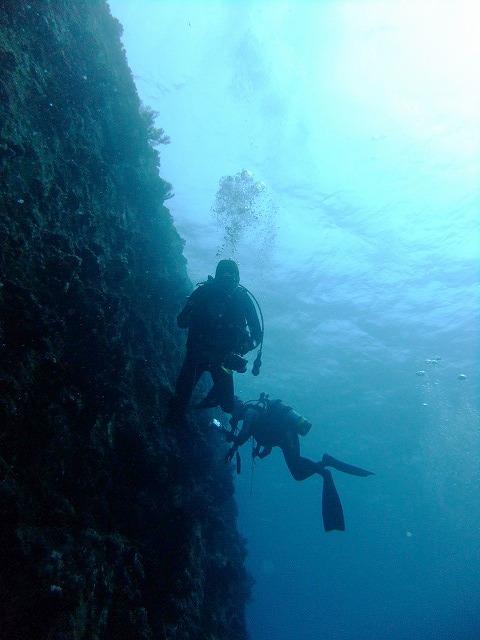 サンゴ復活