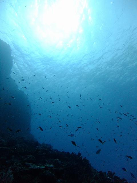 2年ぶりの体験ダイビング