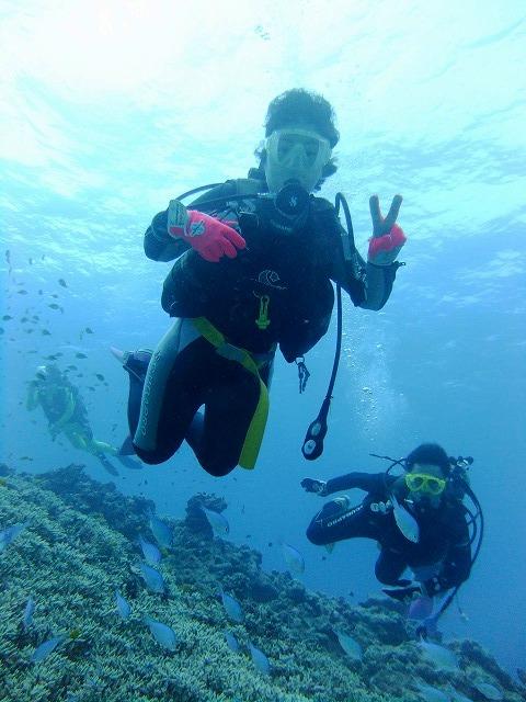 サンゴ礁のウミガメ