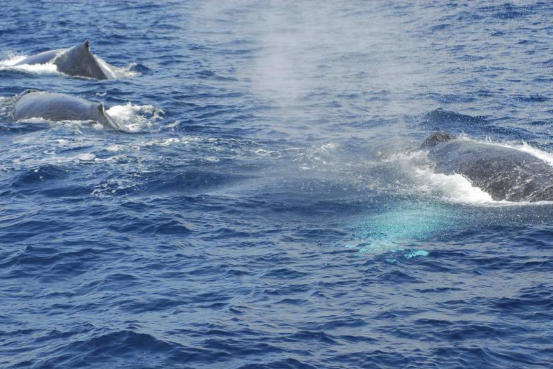 今シーズン初クジラ