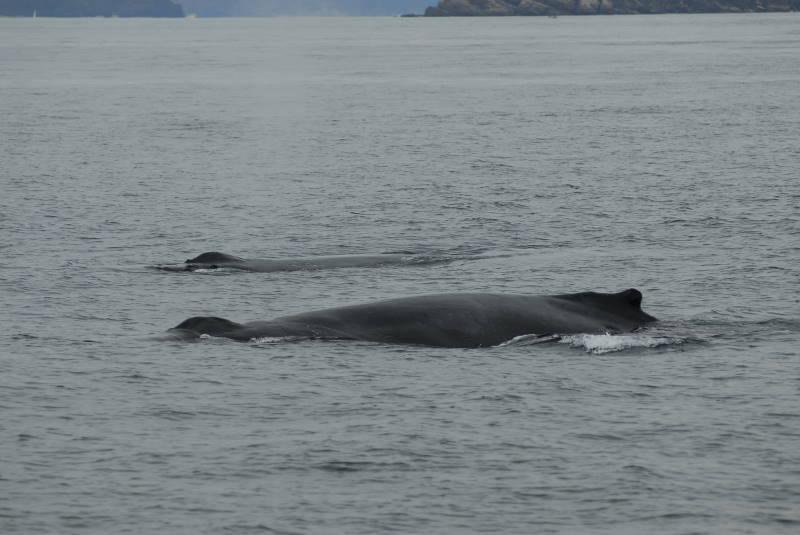 今日のクジラ