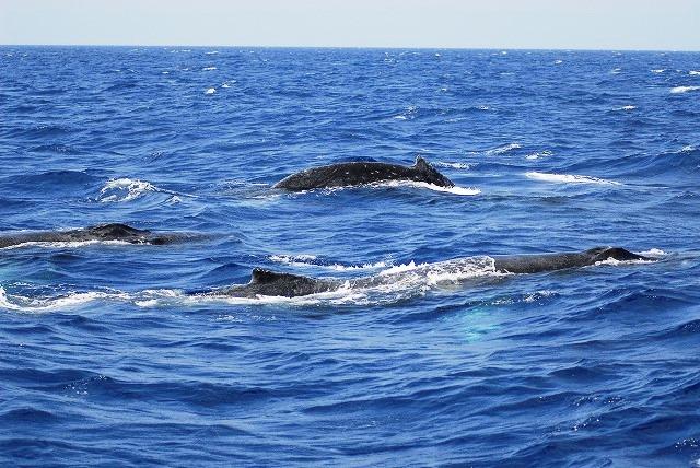 クジラに囲まれたい!