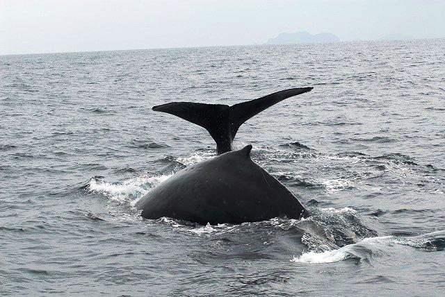 クジラ&イルカ