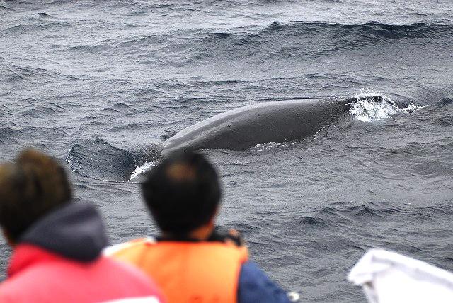 子クジラのプチたっくわり
