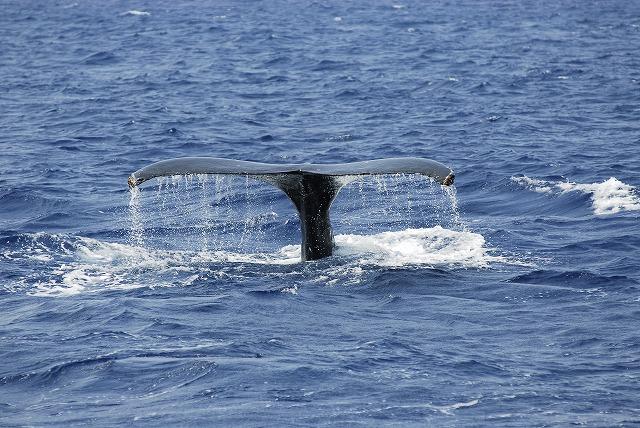 可愛い親子クジラ!