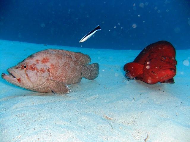ウミガメ3種!