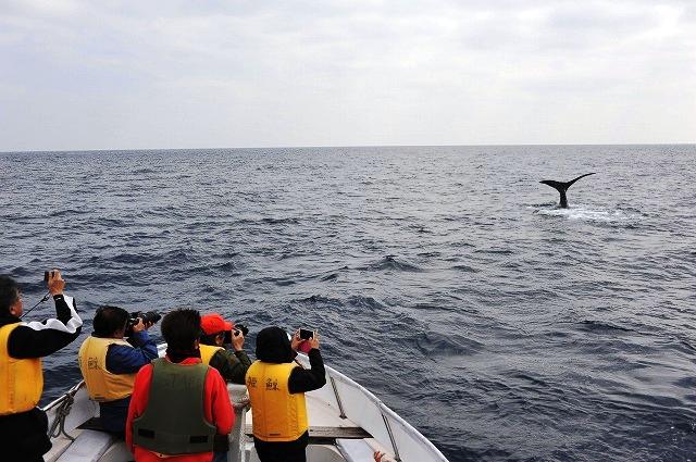人&クジラ