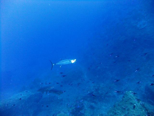 3年連続の体験ダイビング