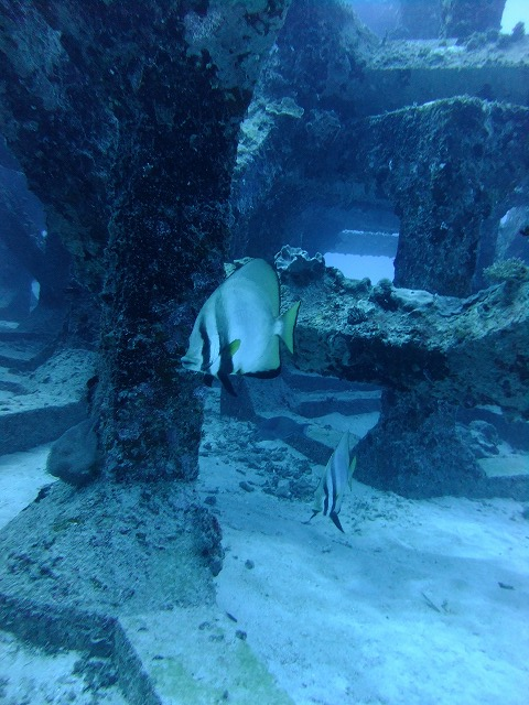 魚礁2ダイブ