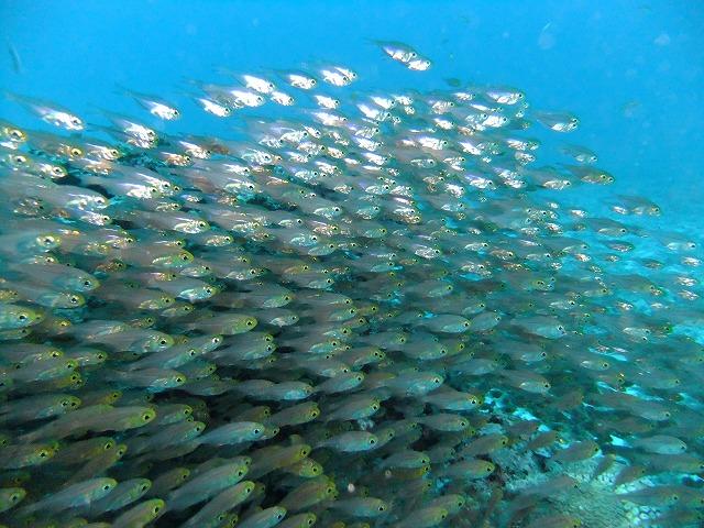 サンゴ再生