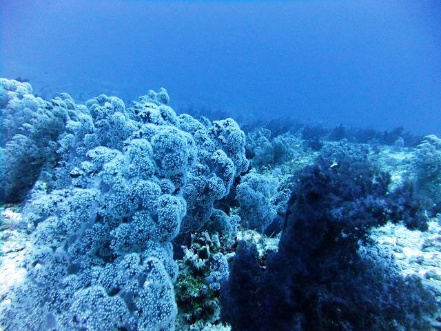 水深30mの世界